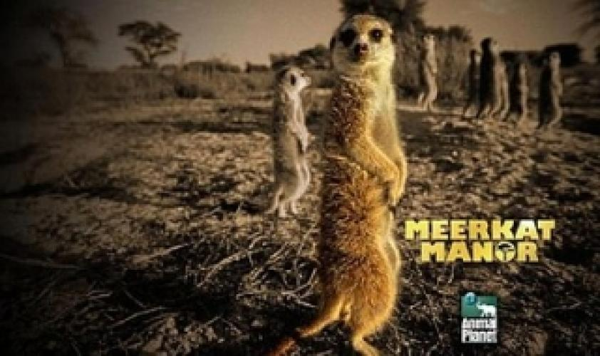 Meerkat Manor next episode air date poster