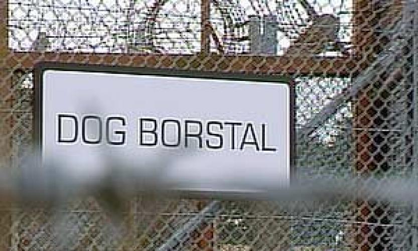 Dog Borstal next episode air date poster