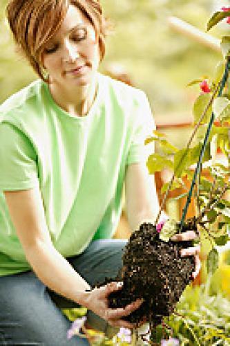 Ask DIY Gardening next episode air date poster