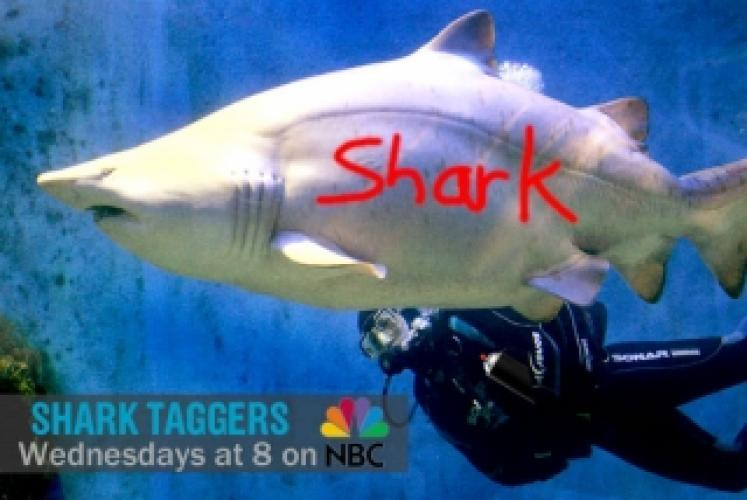 Shark Taggers next episode air date poster