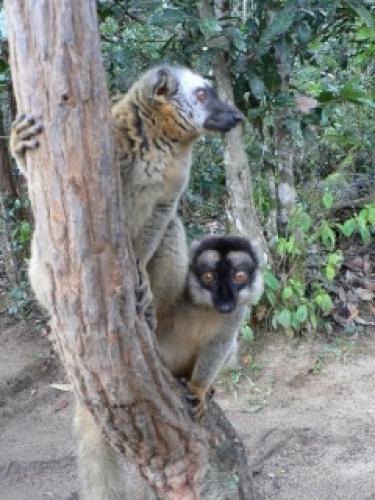 Lemur Island next episode air date poster