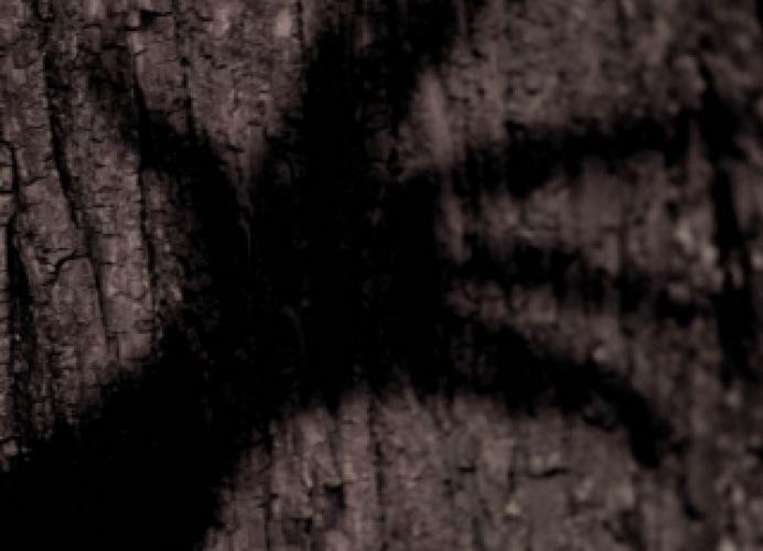 Wer hat Angst vorm schwarzen Mann? next episode air date poster