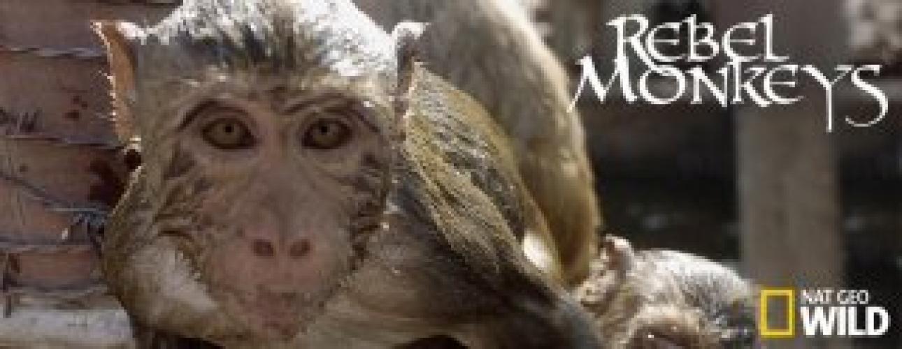 Rebel Monkeys next episode air date poster