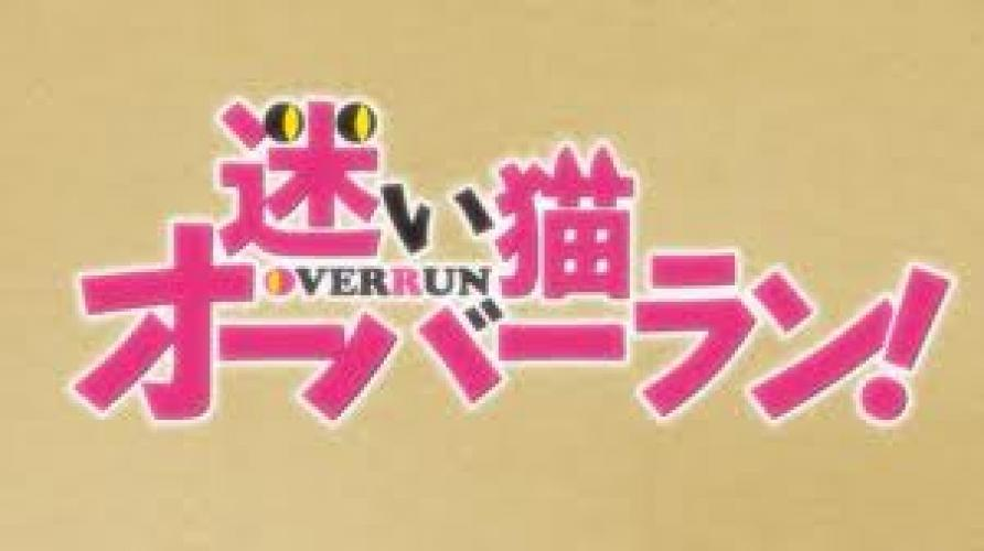 Mayoi Neko Overrun! next episode air date poster