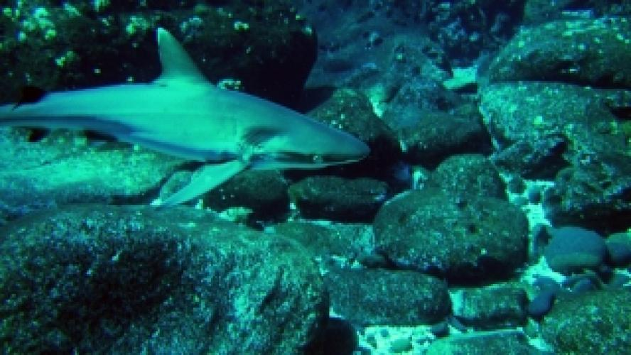 Secret Shark Pits next episode air date poster