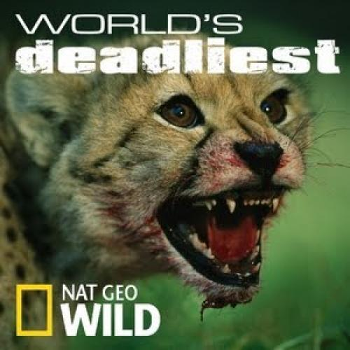 World's Deadliest next episode air date poster