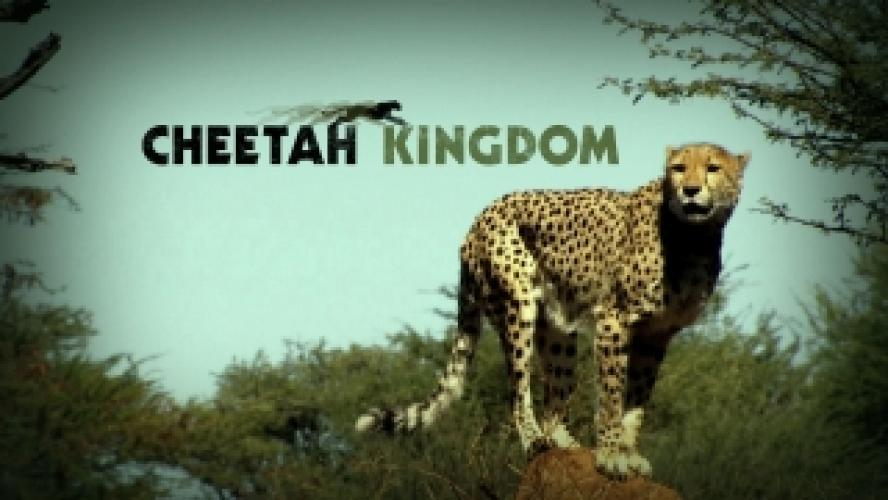Cheetah Kingdom next episode air date poster