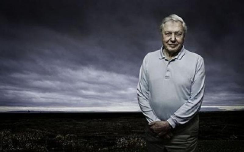 David Attenborough's First Life next episode air date poster
