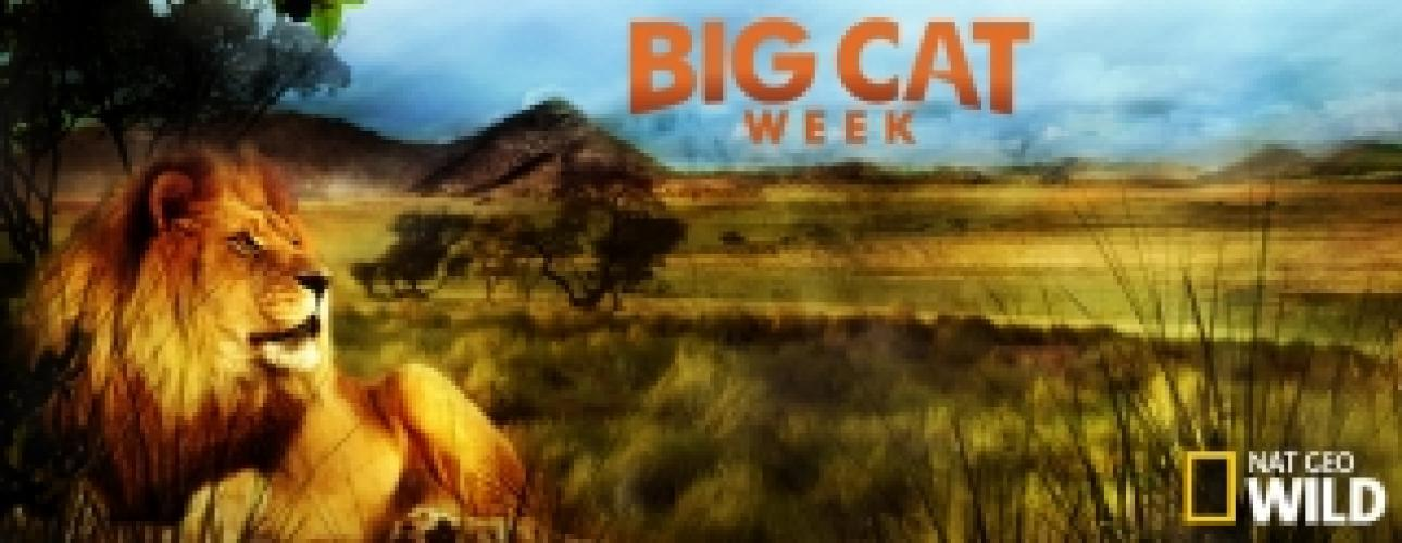 Big Cat Week next episode air date poster