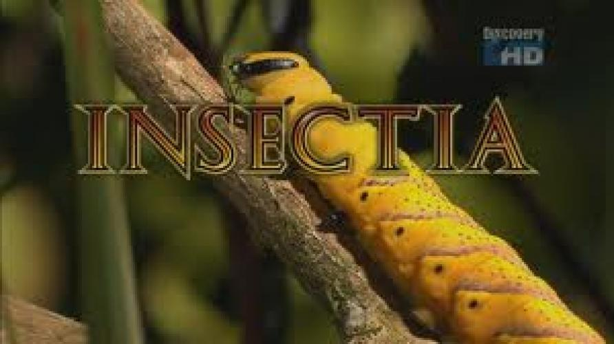 Insectia next episode air date poster