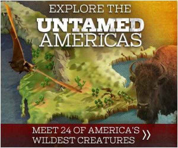 Untamed Americas next episode air date poster