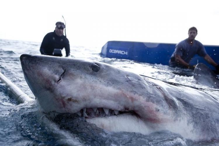 Shark Wranglers next episode air date poster