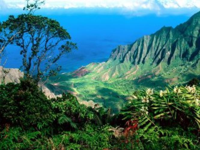 Wild Hawaii next episode air date poster