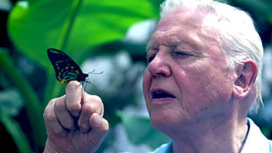 Attenborough's Ark next episode air date poster