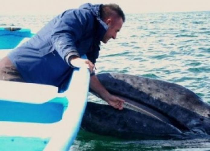 Whale Adventure with Nigel Marven next episode air date poster