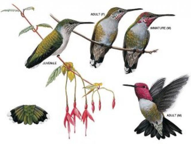 Hummingbirds next episode air date poster