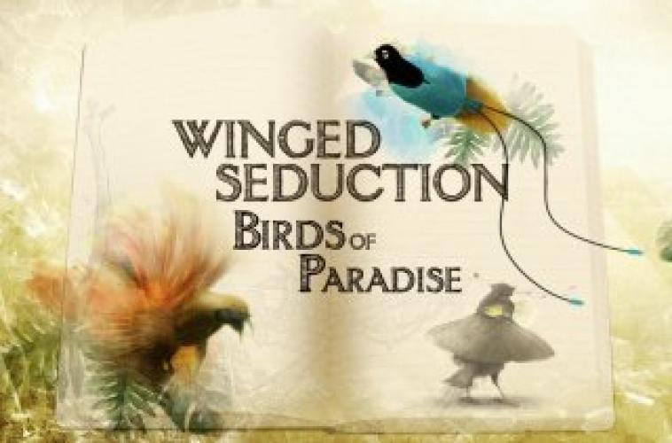 Winged Seduction next episode air date poster
