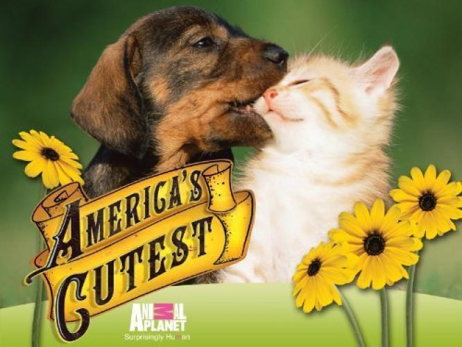 America's Cutest Pet next episode air date poster