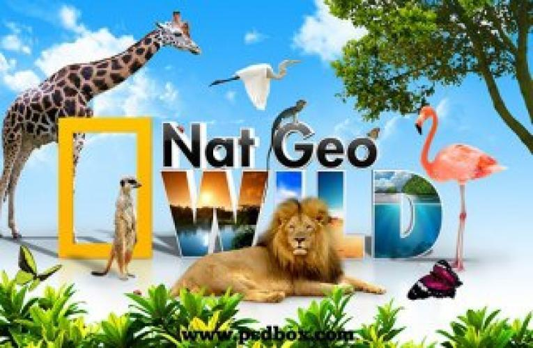 National Geographic Wild Special next episode air date poster