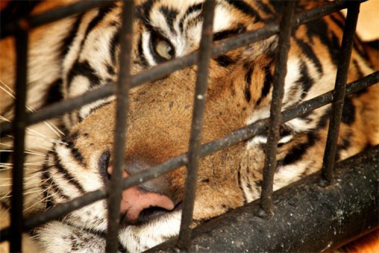 Man-Eating Tigers of Sumatra next episode air date poster