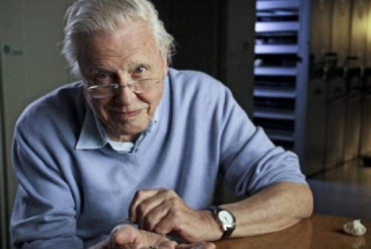 David Attenborough's Rise of Animals next episode air date poster