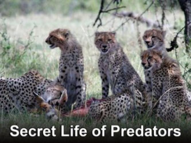 Secret Life of Predators next episode air date poster