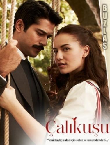 Çalikusu (2013) next episode air date poster