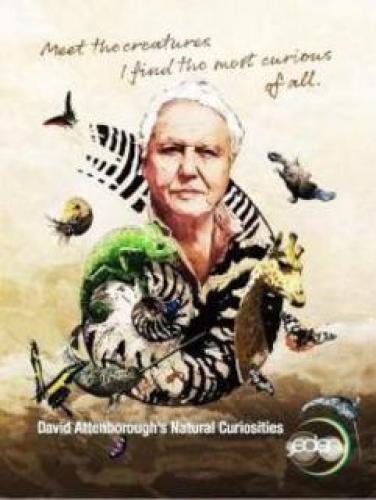 David Attenborough's Natural Curiosities next episode air date poster