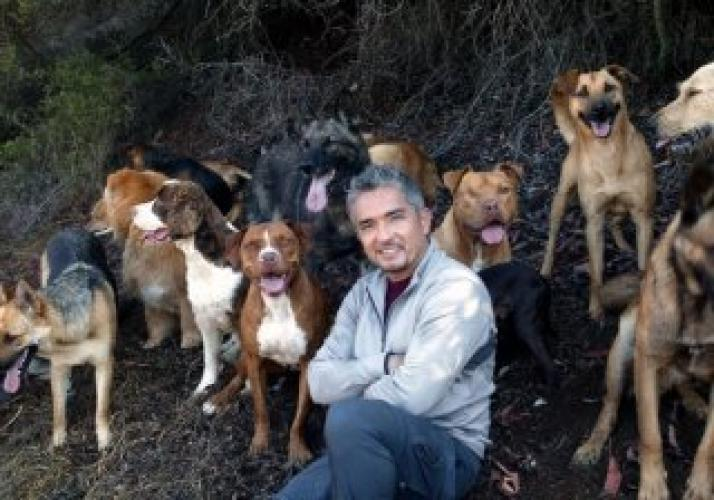 Cesar Millan: Doggie Nightmares next episode air date poster