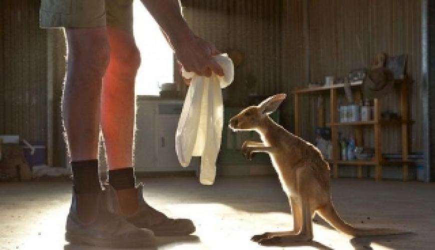 Kangaroo Dundee next episode air date poster