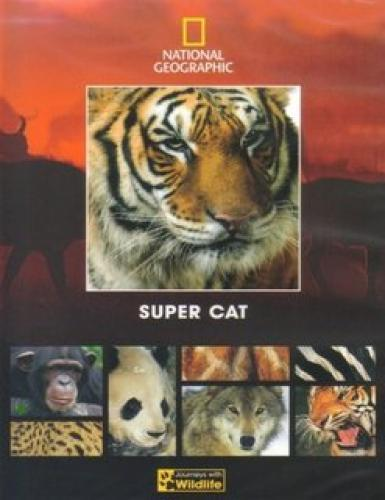 Super Cat next episode air date poster