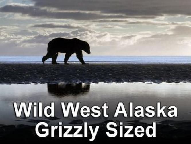 Wild West Alaska: Grizzly Sized next episode air date poster