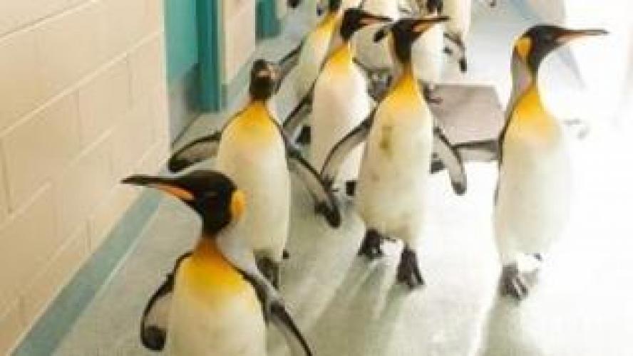 Building Penguin Paradise next episode air date poster