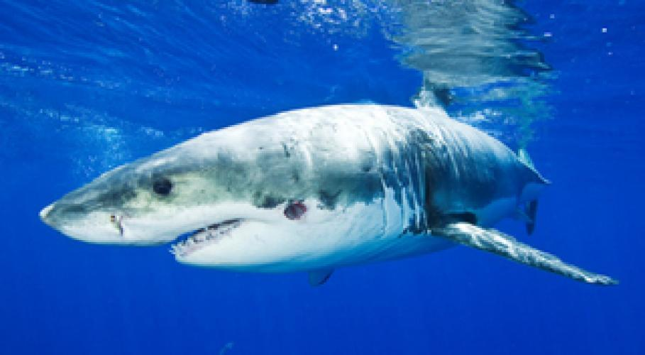 Great White Eaten Alive next episode air date poster