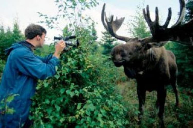 Alaska Moose Men next episode air date poster