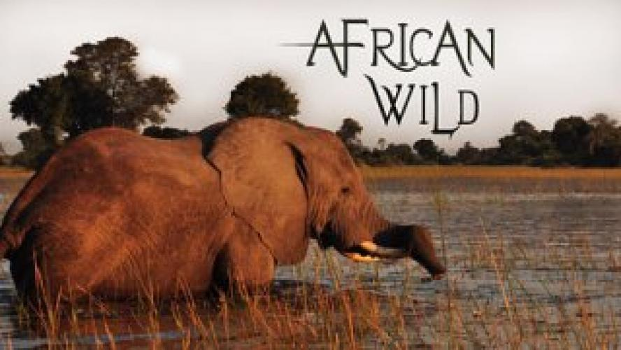 African Wild next episode air date poster