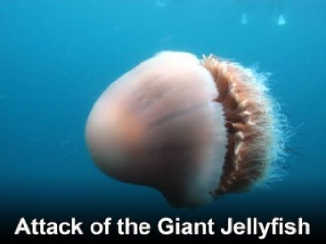 Attack of the Giant Jellyfish next episode air date poster