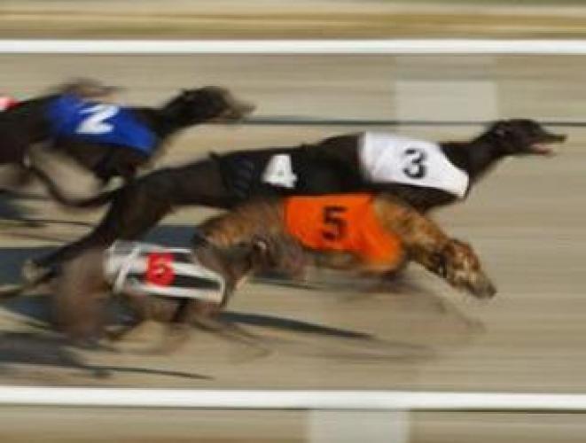 RPGTV Live Greyhound Racing next episode air date poster