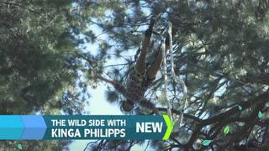 The Wild Side with Kinga Philipps next episode air date poster