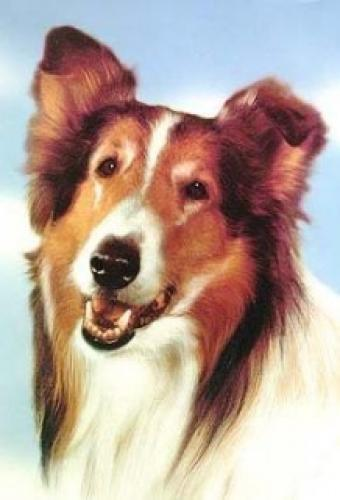 Lassie (US) next episode air date poster