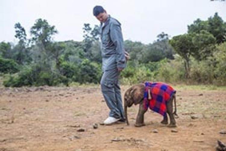 Saving Africa's Giants with Yao Ming next episode air date poster
