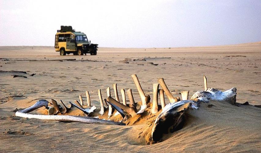 Namibia's Skeleton Coast next episode air date poster