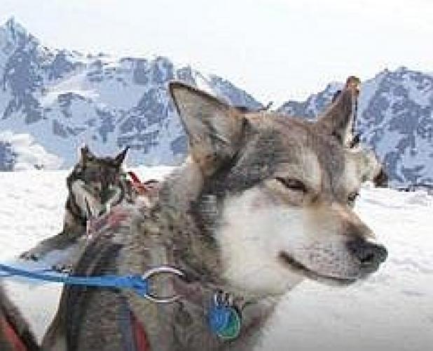 Alaska Starts Here next episode air date poster