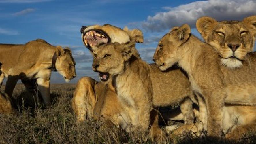 Lion Gangland next episode air date poster