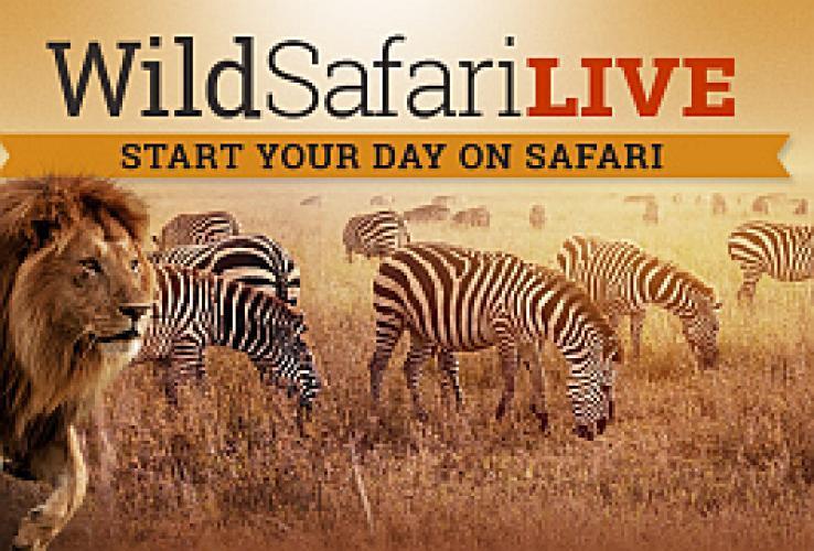 Safari Live next episode air date poster