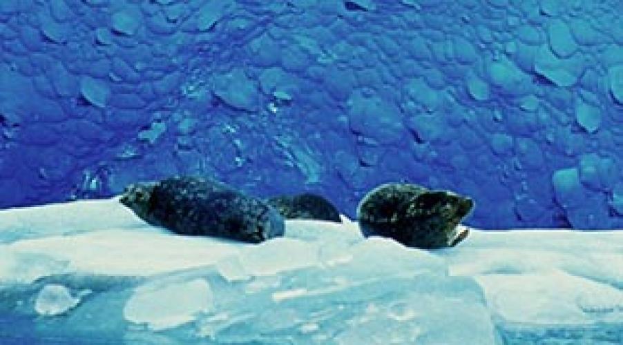 Alaska's Glacier Bay next episode air date poster