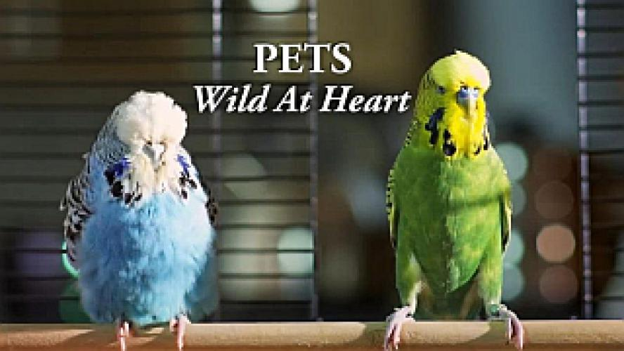 Pets - Wild at Heart next episode air date poster