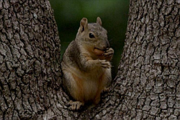 Super Squirrel next episode air date poster