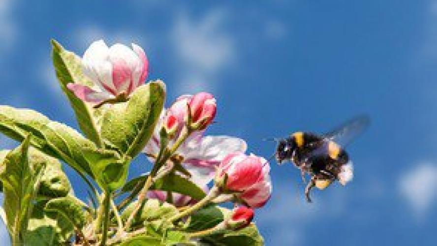 Bumblebees next episode air date poster