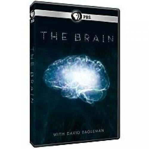 The Brain with David Eagleman next episode air date poster